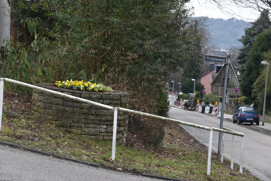 Frühling an der Schmachtenbergstraße
